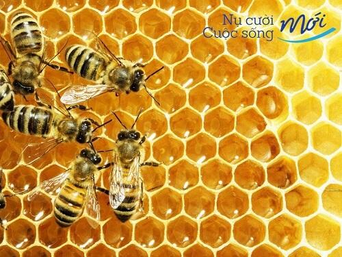 mật ong là gì